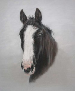 Horse Portraits Hero Image