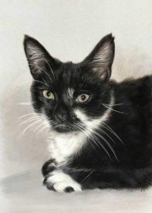 Cat Portraits in Pastels