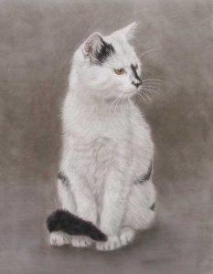 Pastel Cat Portraits