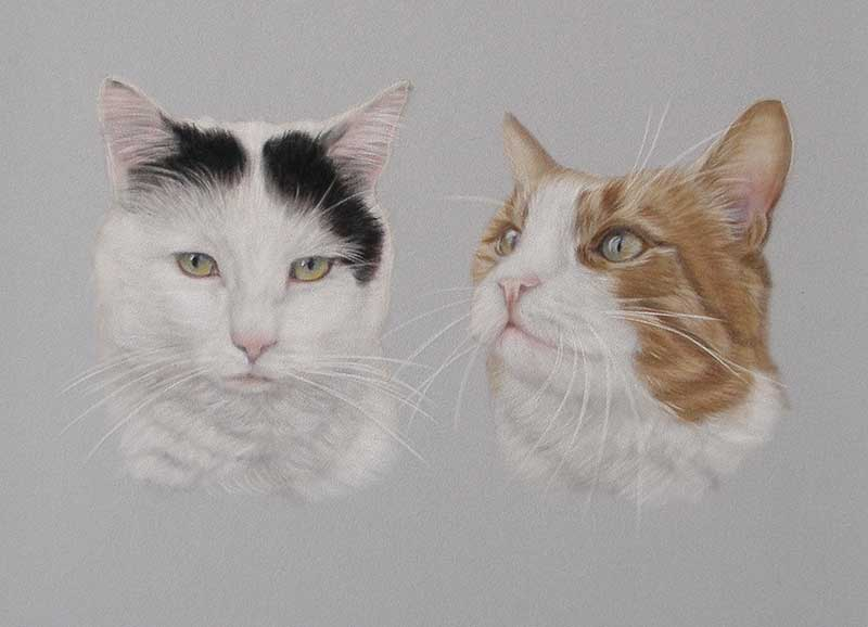 Cat Portraits in oils and pastels