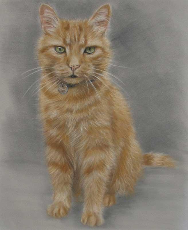 Cat Portraits Hero Image