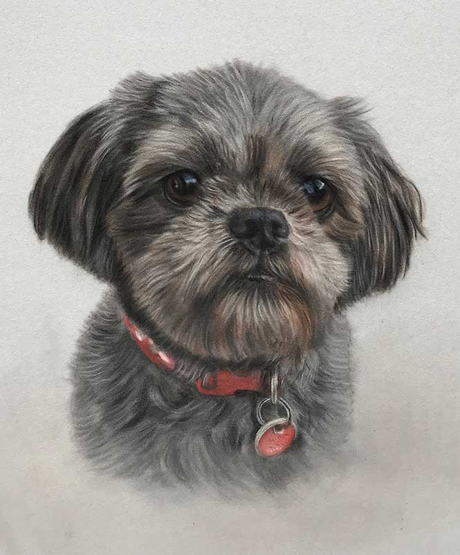 Pet Portraits by Lorraine Gray