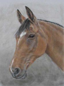 Custom Horse Portraits by Lorraine Gray