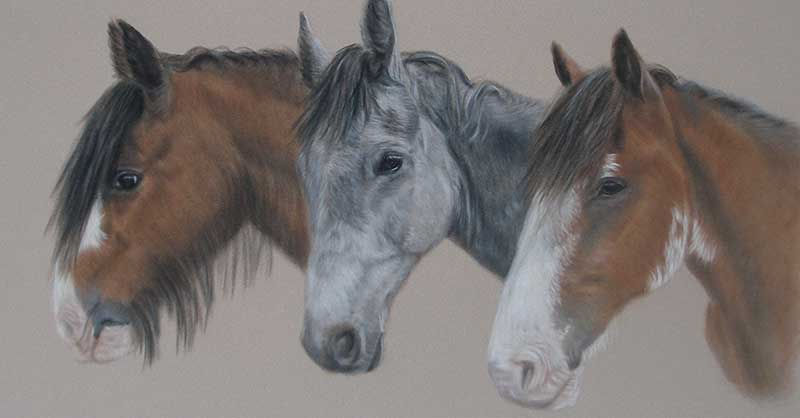 Portrait of Three Horses
