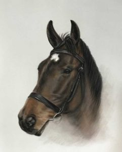 Horse Portraits from photos