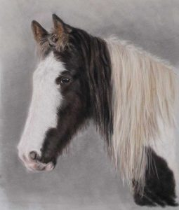 Horse Portraits by Lorraine Gray