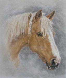 Horse Portrait by Lorraine Gray