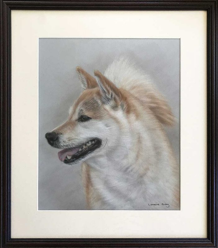 Framed Shiba Inu Portrait
