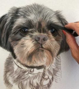 Shih Tzu Pastel Painting of Poppy