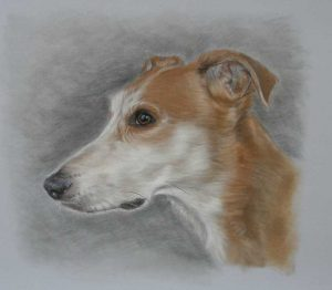 Sighthound Dog Portrait