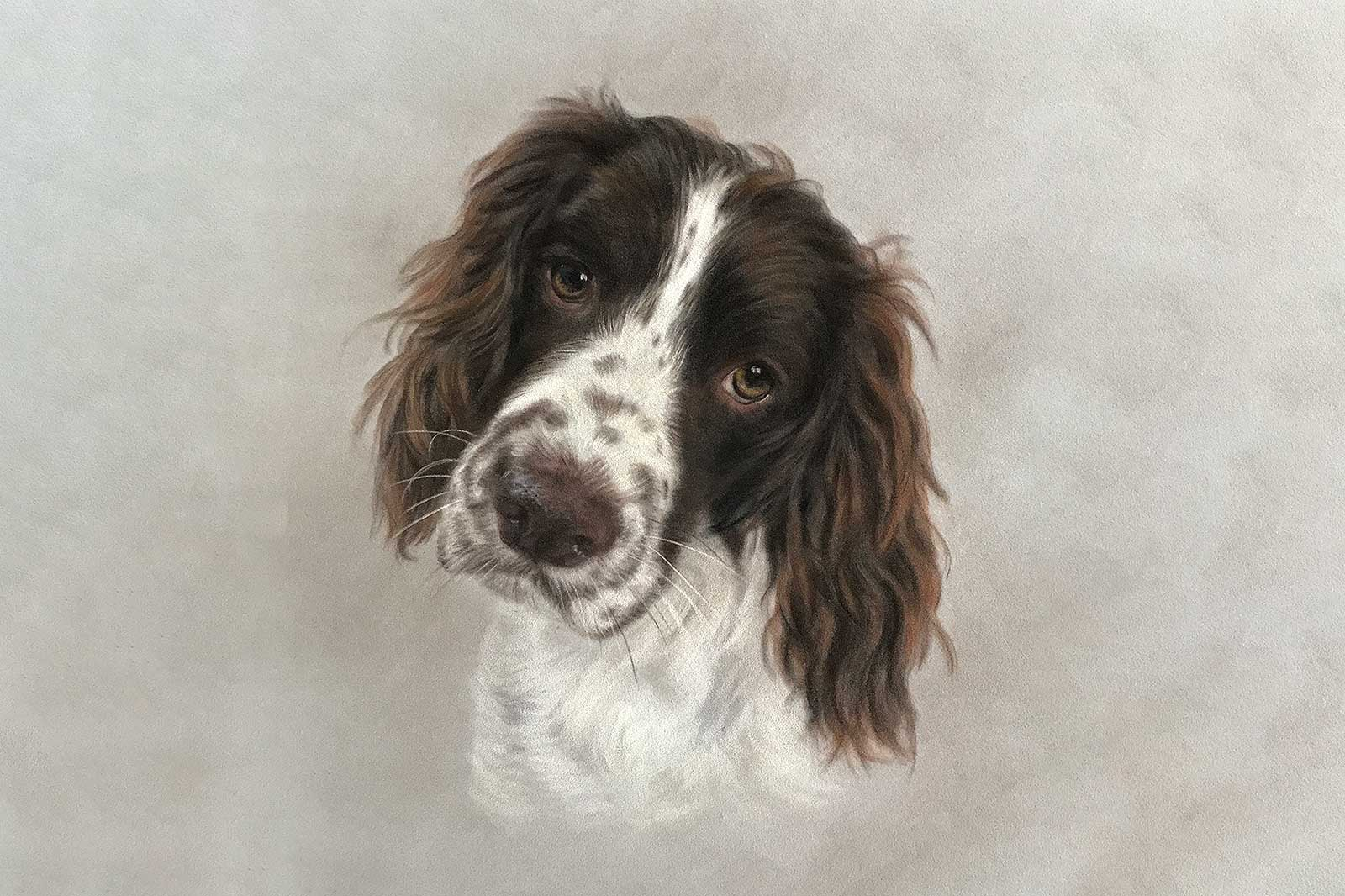 Springer Spaniel portrait