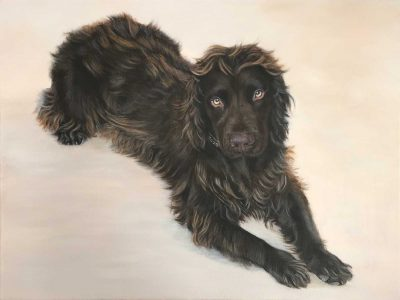 Chocolate Cocker Spaniel Portrait