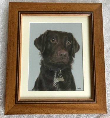 Springador portrait framed