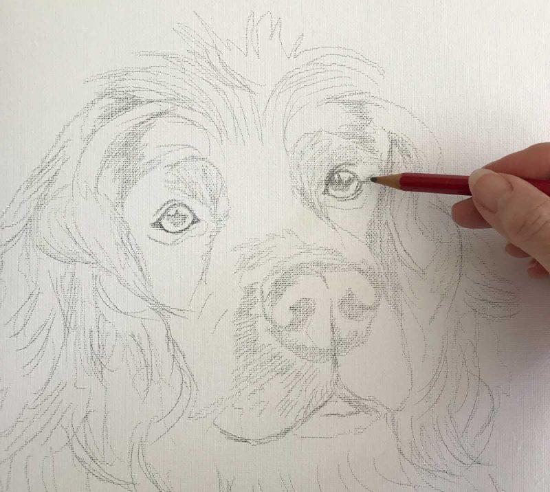 Pencil Sketch of a Spaniel
