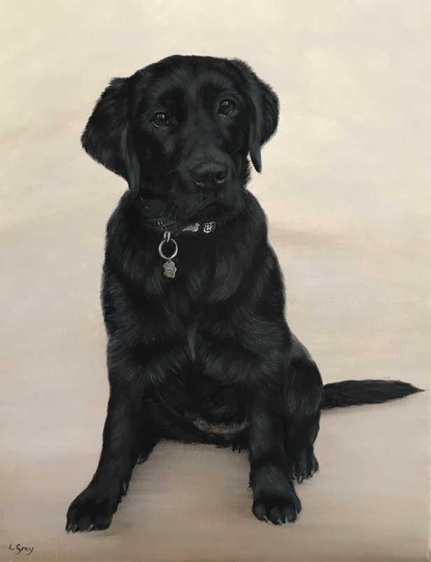 Black Puppy Labrador Portrait