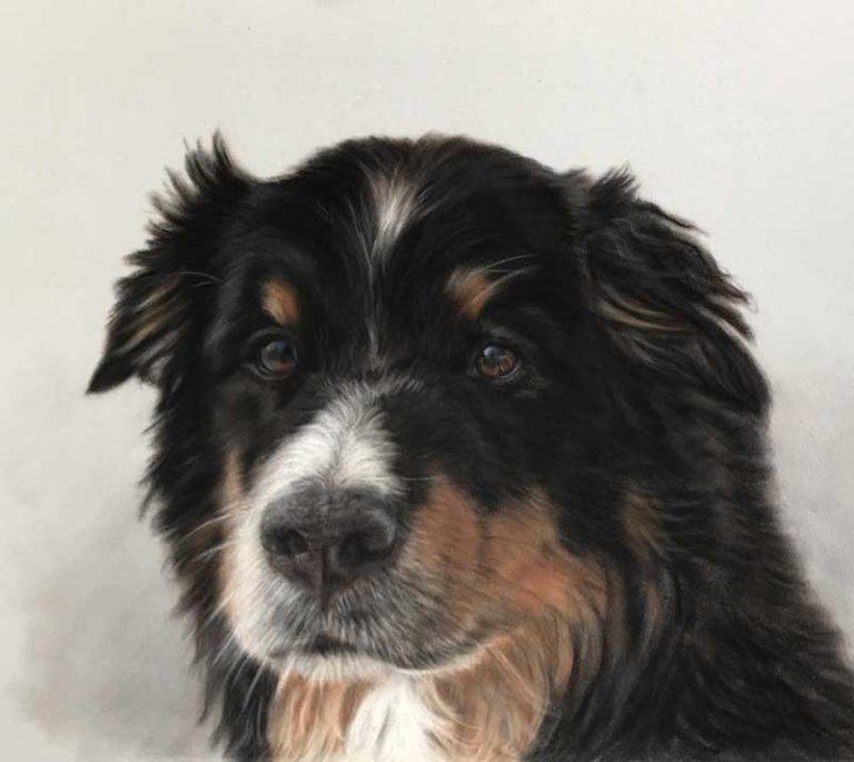 Dog portrait in pastels