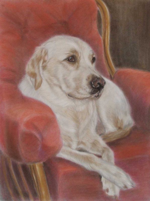 Dog portrait on Hahnemuhle Velour pastel paper