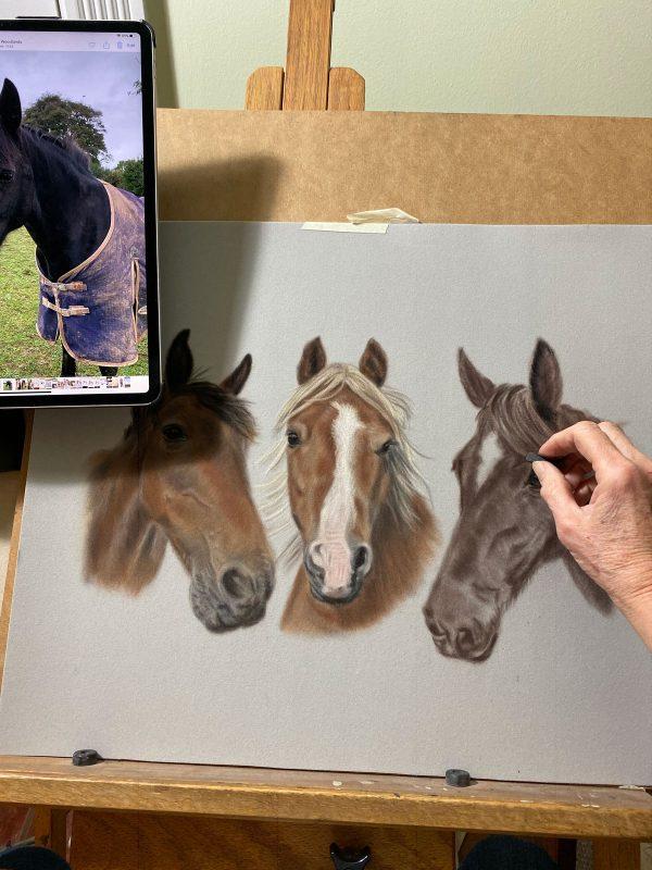 portraits of pets - horses
