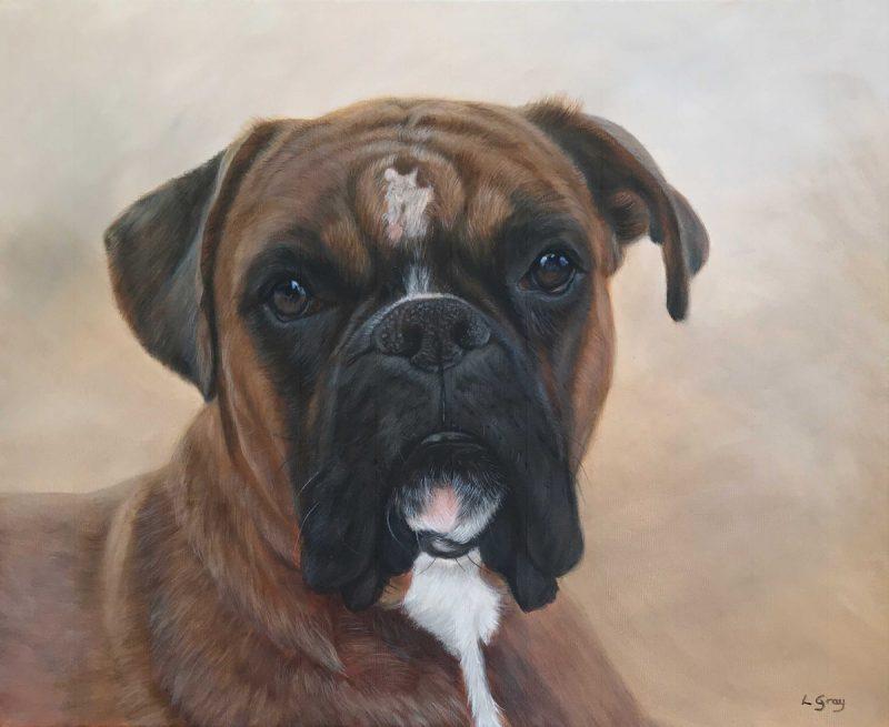 portrait of pets boxer dog