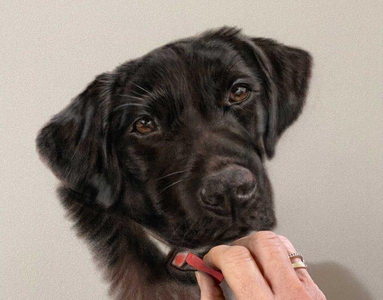 portraits of pets - labrador