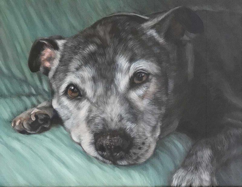 portrait of pets - oil portrait