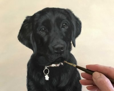 Black Labrador Portrait Oils